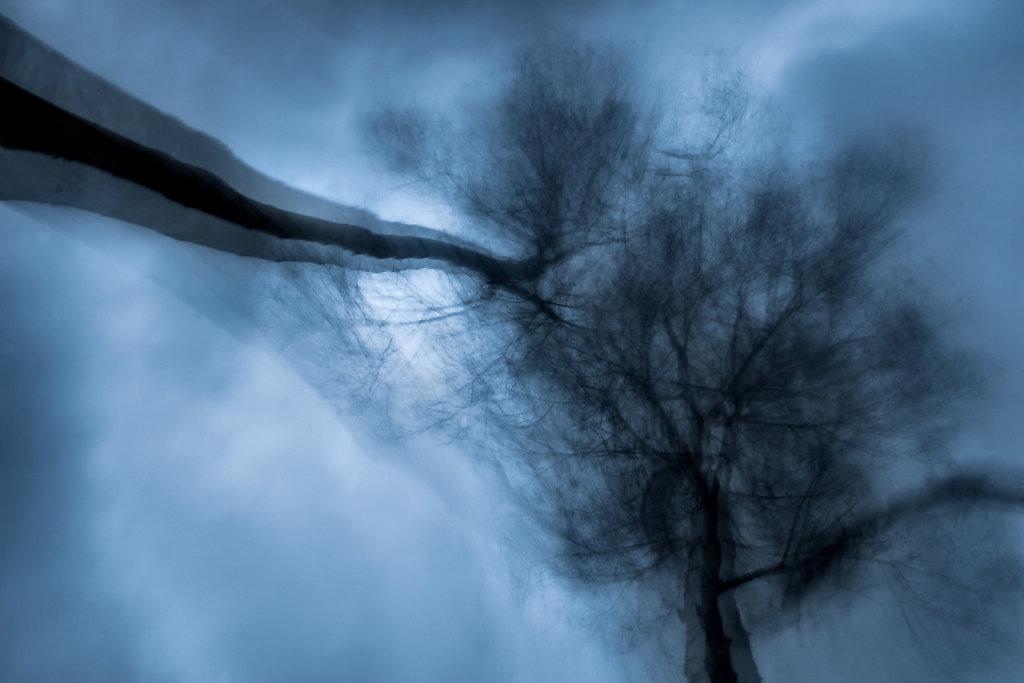Berken in de storm