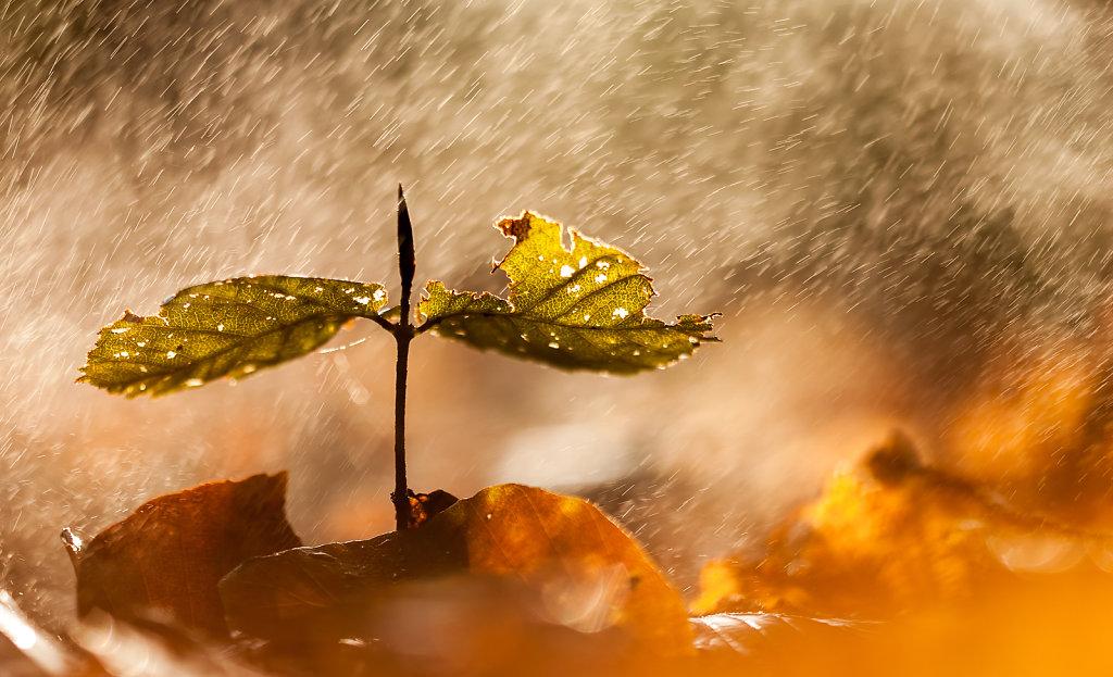 Beukje in de herfst met spetters