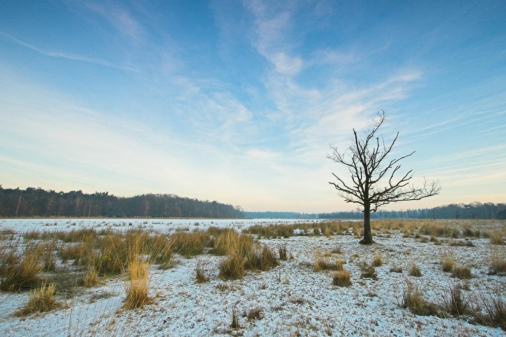 Bevroren ven Leersumse veld