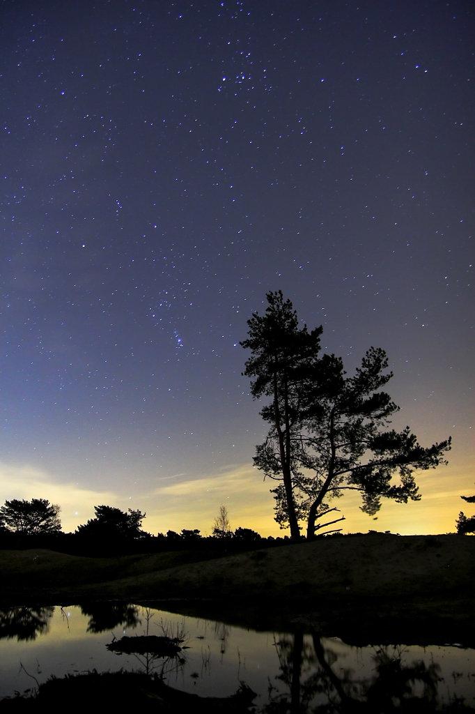 Den, Orion en Stier