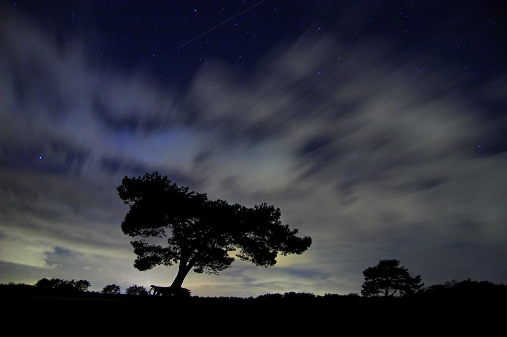 Lopende boom bij nacht