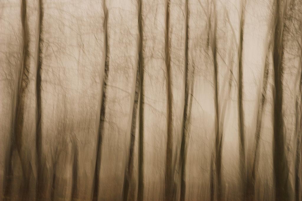 Berken in de mist