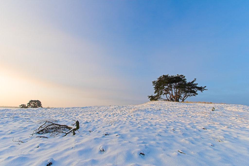 Kootwijkerzand in de winter